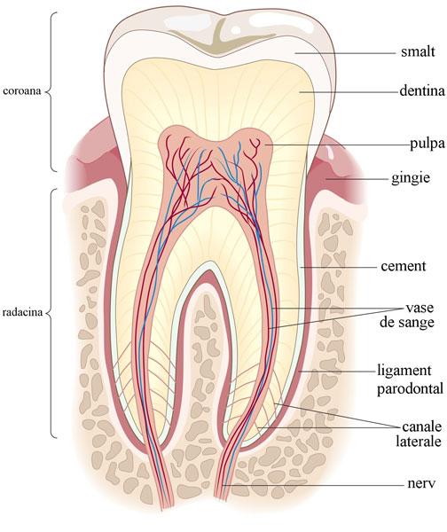extractia-nervului2